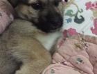 刚出生小奶狗寻求领养