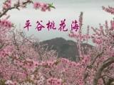 2020春季郊游一日推薦-平谷桃花節一日游-平谷桃花節