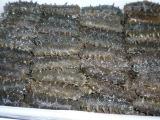 批发水产干货 盐渍大连海参  滋补佳品 送礼海鲜珍品