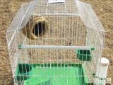 低价出售 鸟笼子