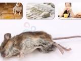 广州天河灭老鼠公司,逮老鼠无效退款清除鼠尸,灭鼠人员持证上岗