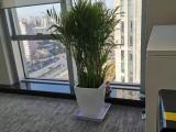 北京大興辦公室植物租賃花卉租賃