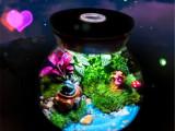 微景观玻璃瓶带灯 批发玻璃瓶 玻璃生态玻璃瓶 黑夜梦幻世界