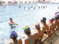 江门游泳培训中心,蛙泳培训,自由泳培训仰泳蝶泳培训