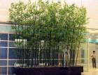 北京顺义种植绿化苗木出售全城配送 及时送达