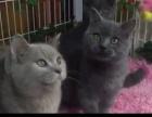 加养100多只小猫出售