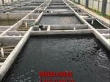 承接锦鲤鱼池过滤,吃奶鱼池建造及售卖