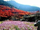 临朐红叶谷登山穿越