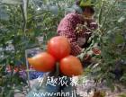 上海农家乐一日游 采小番茄摘西瓜 钓小龙虾 海边抓螃蟹
