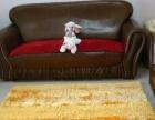 沙发清洗、地毯清洗、窗帘清洗、床垫清洗、家庭保洁等