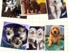 出售各种猫猫狗狗