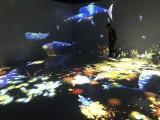 本溪ar互动投影体验多种素材互动出售
