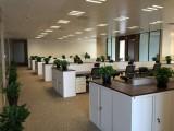 办公室写字楼绿植租赁 绿植租摆 花卉租赁 园林绿化