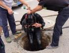 硚口区汉口春天疏通马桶多少钱 马桶堵了怎么办 厕所疏通地漏