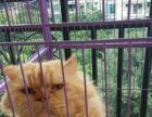萌萌哒奶猫找家长
