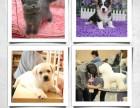 NGKC合作宠物美容师培训学校招收宠物美容师学员