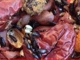 自家养的九龙虫,洋虫,纯中药喂养,可货到付款