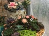 开业花篮 会议会场鲜花布置 花卉植物长期租摆