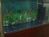 全新森森鱼缸 入手就可养鱼