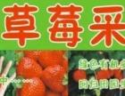 草莓疯狂采摘中