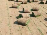 北京草坪价格,北京草坪价格北京草坪基地