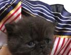 多只小加菲猫六一特价