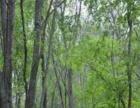 黑龙江伊春市翠峦区2250亩林地转让