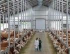 湘潭周边哪里有卖肉牛犊的小牛犊多少钱一斤