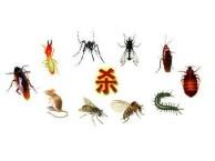 重庆专业灭鼠杀虫公司璧山专业灭鼠杀虫公司