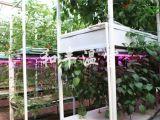 和丰温室工程专业供应立体栽培,江苏无土栽培
