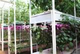 专业的无土栽培批发商,当属和丰温室工程|无土栽培观光园