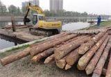 庭轩专业木材批发景观河打桩木河道打桩木 松木桩杉木桩