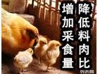 鸡腺胃炎发病原因,腺胃炎治疗方案