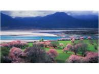 西藏旅游,泸州全球通旅游带你赏林芝桃花沟