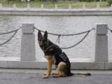 常熟訓犬訓狗寵物犬訓練培訓中心學校在這里