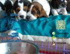 哪一家宠物店卖纯种健康的巴吉度多少钱一只