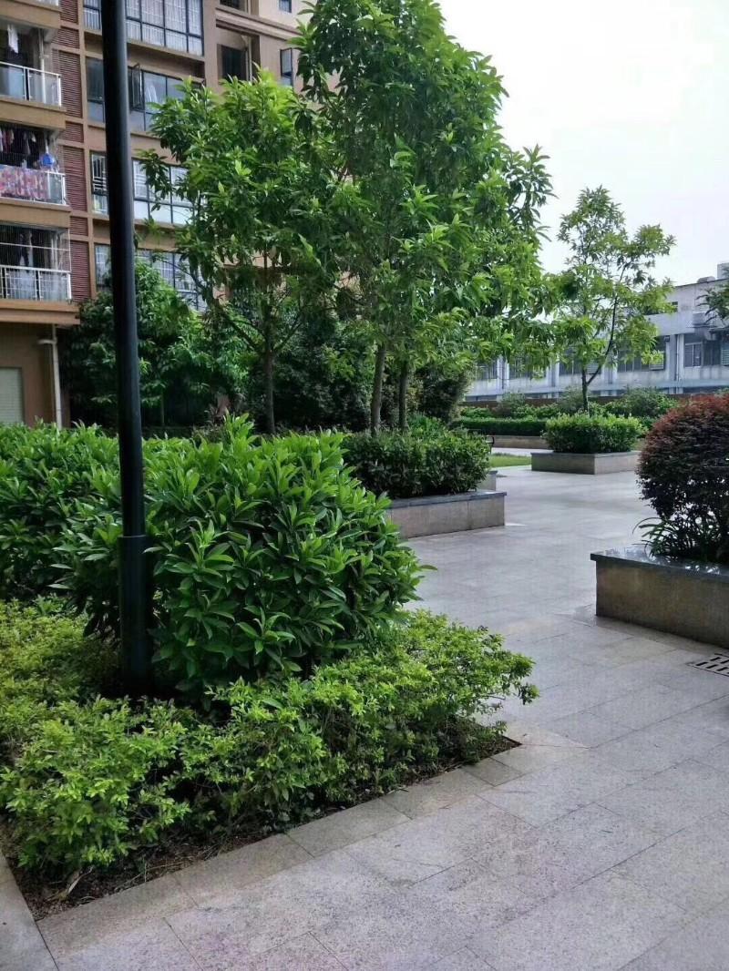 公明村委统建楼 锦田花园 地铁口200米村委绿本房锦田花园