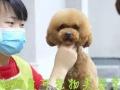 杭州爱可宠物美容培训学校!