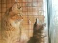 我不是黄蓉,但比黄蓉可爱,虎斑猫买家反悔扣除押金低价转让