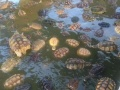 海南海狸鼠养殖刺猬养殖加盟 种植养殖
