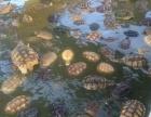 广西海狸鼠养殖广西刺猬养殖加盟 种植养殖