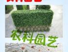 植物租赁/写字楼植物租赁/质优价廉 园林绿化养护