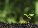 供应菌基有机碳肥 丰夷 菌基有机碳肥是什么