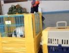 重庆机场幕色托运中心专业从事国内、国际宠物航空托运的航空货运