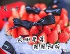 尚田镇下王草莓采摘-2018