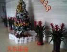 天津河西花卉租摆绿植销售绿植养护服务公司海明花卉全城配送送货