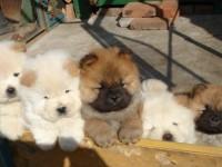 武汉宠物领养中心 身份证实名免费领养
