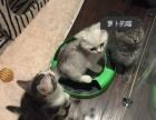 萝卜的猫舍 开业酬宾 到店看猫送礼品