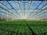 现代化高效生产玻璃温室大棚介绍