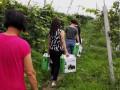 徐水何庄葡萄采摘生态农庄,自然放养法种植葡萄